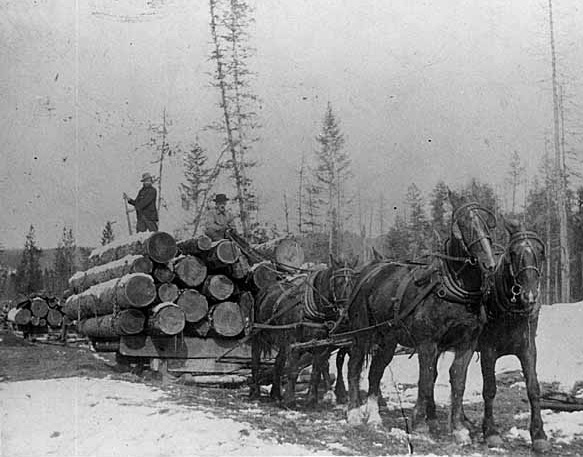 Horses were used to haul logs out of the woods.